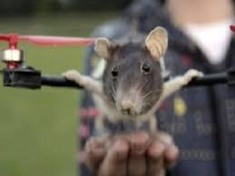 Rat Kong beffa i rat-buster e ricorre a Lady Copter